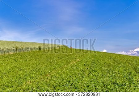 Agricultural Field With A Female Deer (doe, Hind) In The Distance. With Copyspace For Text.
