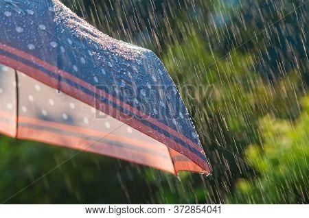 Rain. Rain Drops Fall On The Umbrella