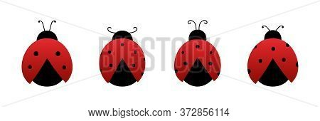 Coccinellidae, Red Ladybug Beetles Vector Icons Set, Collection.