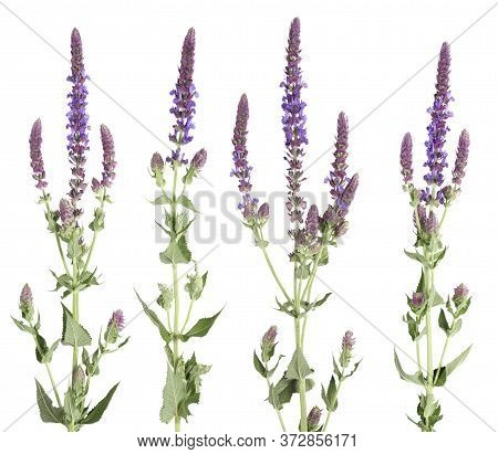 Set Of Wildflowers Isolated On A White Background
