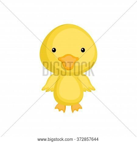 Cute Funny Baby Duck Isolated On White Background. Adorable Animal Character For Design Of Album, Sc