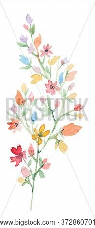 Watercolor Wildflower Branch. Hand Drawn Floral Element Isolated On A White Background. Perfect For