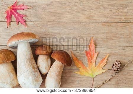 White Mushrooms (boletus Edulis) On A Wooden Table. Autumn Concept