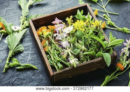 Healing Herbs In Box
