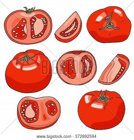 Vector Red Tomatoes Set. Hand Drawn Whole, Sliced And Half Cut Fresh Tomato Vegetables Isolated On W