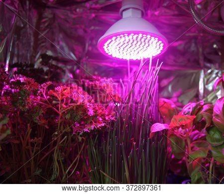 Home Made Herbs Garden
