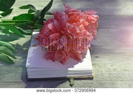 Open Diary Notebook And Bouquet Of Flowers Piones. Beautiful Greeting Card. The Concept Of The Begin