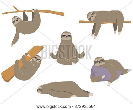 Sloths In Different Poses. Lazy Animals In Cartoon Style.