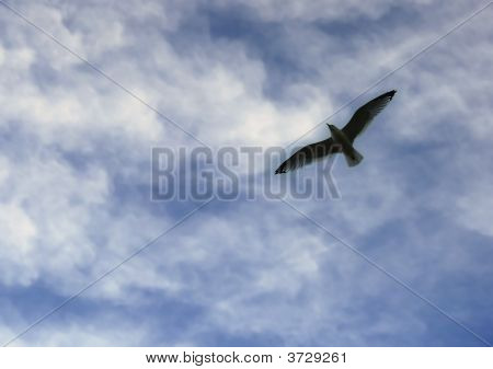Seagull In Blue Sky