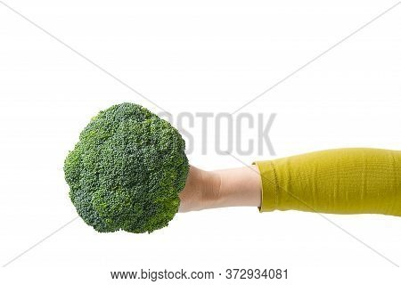 Fresh Organic Green Broccoli In Womans Hand, Concept Healthy Food. Female Hand Holding Broccoli Isol