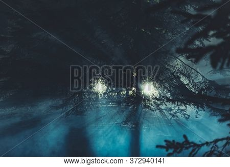 Two Mysterious Lights In Dark Forest During Night Hours Conceptual Photo. Strange Glowing Balls Betw