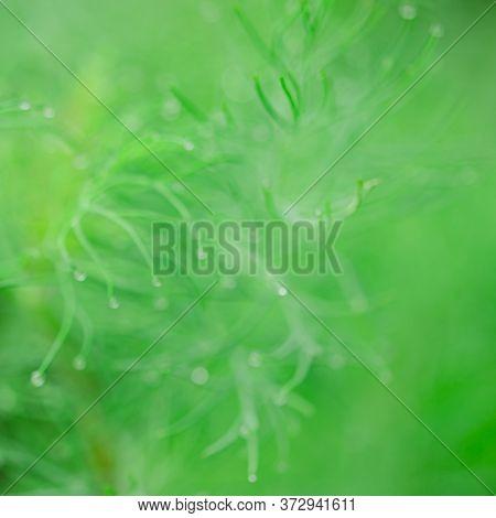 Blurred. The Fresh Green Bokeh. Bright Green Vegetable Background