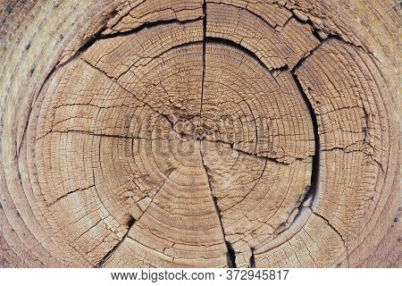 Cracked Bough On An Old Dried Wooden Board Close-up. Natural Light Brown Background Or Wallpaper. To