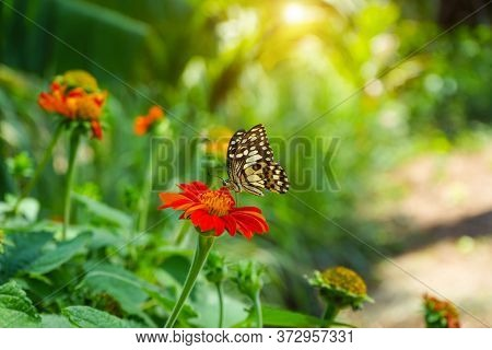 The Butterflies Are Sucking The Nectar From The Brightly Colored Flowers Against The Backdrop Of Gre