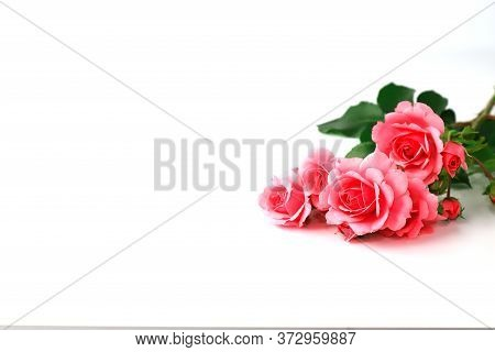Beautiful Red Rose Flowers On A White Background, Bouquet, Isolated. Blooming Romantic Pink Roses -