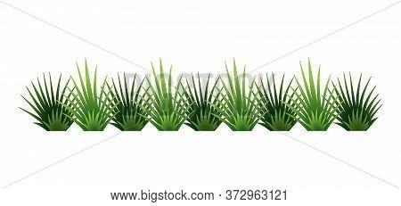 Green Grass Border. Fresh Green Brush Grass. Isolated On Transparent Background. Vector Illustration