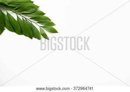 Leaves Minimal Background. Nature Decor. Single Green Palm Twig Isolated On White Copy Space.