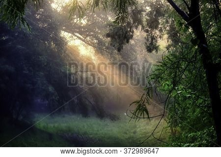 Foggy Morning Sunshine Penetrating Through Trees In An Indian Forest Located In Gurgaon Suburbs In N