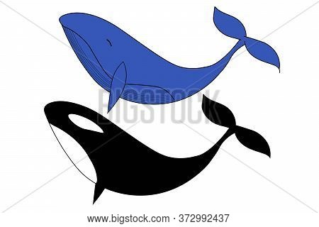 Set Of Whale And Black Orca, Killer Whale. Template For Background, Banner, Card, Poster. Vector Eps