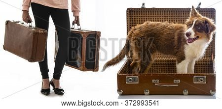 Young Girl With An Old Suitcases And Dog  Isolated On A White Background