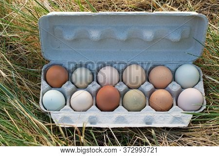 A Dozen Unwashed Free-range Chicken Eggs In Open Carton, On Partly Brown Grass, Viewed From Above