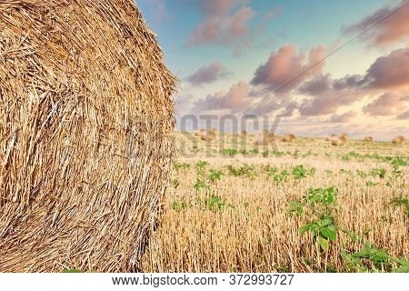 Agricultural Field After Harvest, Straw Rolls, Straw Bale On Farmer Field And Dramatic Cloudy Sky In