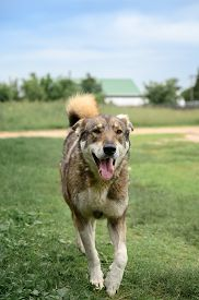 Portrait Of A Cheerful Dog In The Countryside. Mixed Breed. Vertical Orientation.