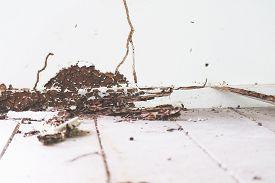 Interior Wood Floor Was Was Damaged By Termite