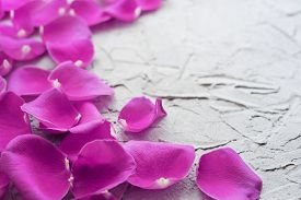 Pink Rose Petals On A Plaster Textured Background With Copy Space.