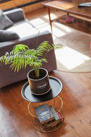 Home Plant In A Pot With The Inscription