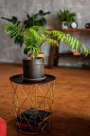 Indoor Plant In A Ceramic Pot On A Small Coffee Table In The Internet Loft.