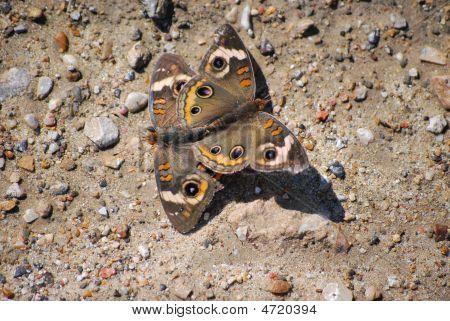 2 Butterflys Mate
