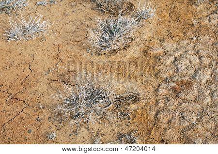Top View Of Desert Plants