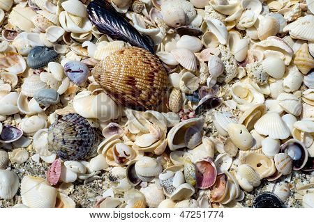 Treasure Of Seashells