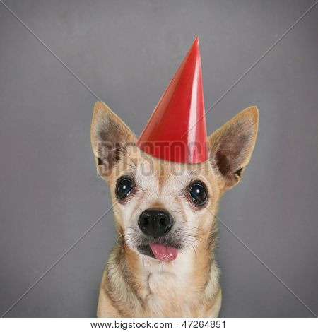 a dog in front of a blank chalkboard with a birthday hat on poster