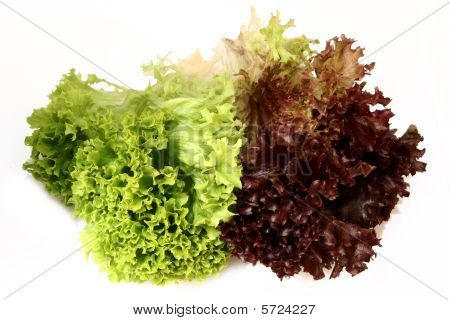 Lactuca Sativa Lettuce_green Red