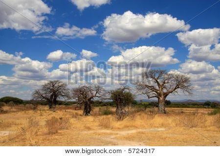 Savanna landscape with baobabs