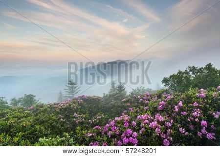 Roan Highlands Rhododendron