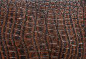 close up of crocodile leather purse  texture poster