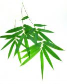 bamboo leaves background poster