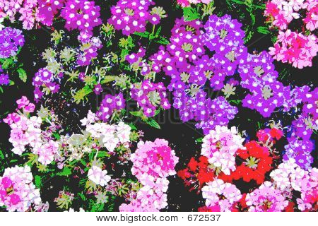 Carmel Flower Bed