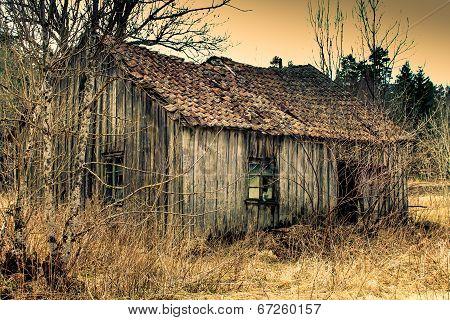 abadoned treehouse