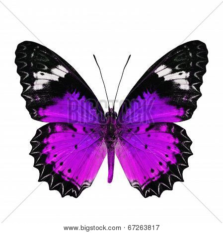 Beautiful purple butterfly in fancy color profile isolated on white background poster