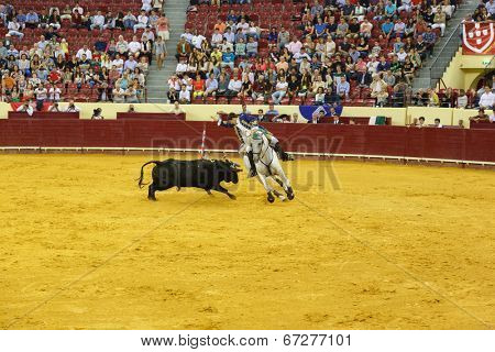 LISBON - JUNE 19: M. Vacas de Carvalho horsemen bullfighter performs at a portuguese style bullfighting show in campo pequeno in Lisbon, Portugal, June 19, 2014