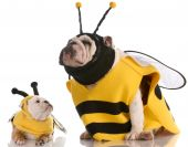 mother and daughter bulldogs dressed up like bees poster