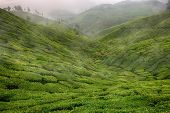 Landscape with green fields of tea in Sri Lanka mountains poster