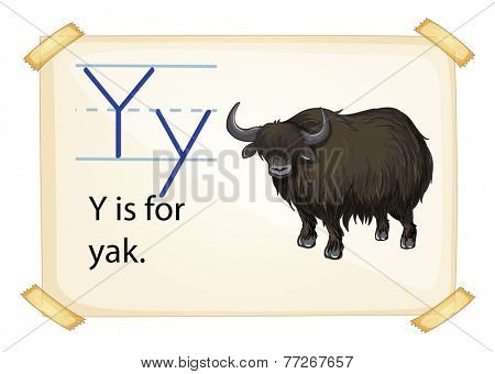 A letter Y for yak on a white background