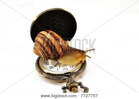 Snail On The Clock
