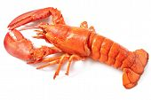 a boiled lobster on the white background poster