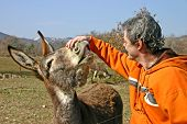 Man interacting with donkey. Both are very happy. poster